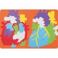 Puzzle goma eva El Sistema Cardiaco