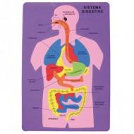 Puzzle goma eva El Sistema Digestivo