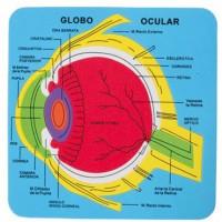 Puzzle goma eva El Sistema Ocular